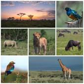 Savannah Safari — Stock Photo