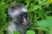 Baby monkey — Stock Photo