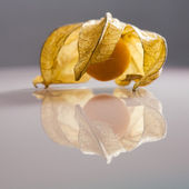 Closeup of Physalis peruviana fruits with light grey background and reflexions — Stok fotoğraf