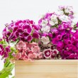 Beautiful chinese carnations (Dianthus chinensis) with details on a wooden surface — Stock Photo #52703995