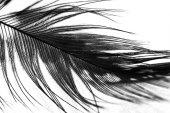 Guinea hen feather with light grey background — Zdjęcie stockowe