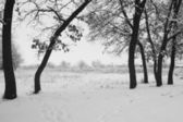 Snowing landscape in the park — Stock Photo