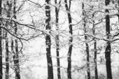 Snowing landscape in the park — Stockfoto