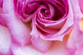 Colorato, bello, delicato rosa con dettagli — Foto Stock
