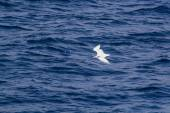 White seagull flying over the blue sea — Stockfoto
