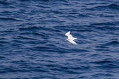 White seagull flying over the blue sea — Foto de Stock