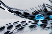 Guinea hen feather with blue water drops and grey background — Zdjęcie stockowe