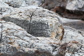 Rocks - textures and layers from Aegean seashore — Stock Photo