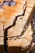 Wood piece with cracks from recently chopped tree trunk - textures — Stock Photo