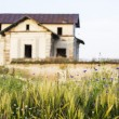 Green wheat field and blue flowers with old, abandoned house in the background — Stock Photo #69004855