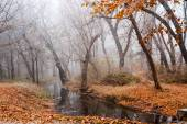 Frozen plants and trees with details and fog in the park at the end of autumn — Stock Photo