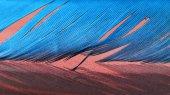 Peří barevné kohout s detaily a podpěry — Stock fotografie