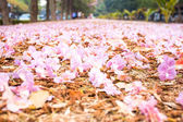 Romantic way of pink flower on the floor — Stock Photo