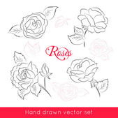 Set of four hand drawn roses — Stock Vector