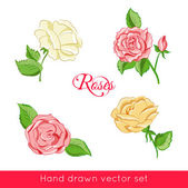 Set of four hand drawn colored roses — Stock Vector