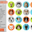 Set of popular breeds of dogs icons — Stock Vector #80951444