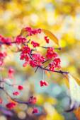 Natural autumnal blurred background with flowers — Stock Photo