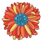 Colorful beautiful flower gerber — Stock Vector