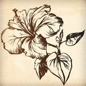 Hand drawn  hibiscus flower — Stock Vector