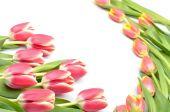 美丽的图案设计的七彩花安排郁金香中心空白为您的文本在白色背景上 — 图库照片