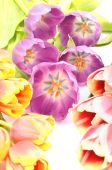 Bouquet Colorful flowers arrangement tulips for congratulations on the celebration on a white background — Stock Photo