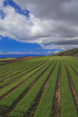 Agricultural fields in Tenerife — Foto de Stock