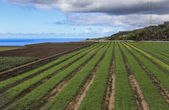 Agricultural fields in Tenerife — Stock Photo