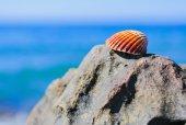 Cailloux de mer — Photo