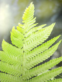 A farn leaf against the light ray. — Stock Photo