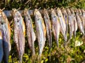 Typical fish named misultin — Stock Photo