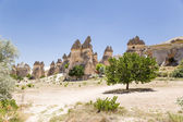 "Cappadocia, Turkey. ""Glade"" stone ""mushrooms"" in the Valley of the Monks (Valley Pashabag) — Stock Photo"
