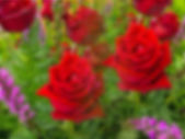 Blurred of red roses bouquet. — Stock Photo