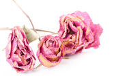 Dried rose flowers with dried leaves — Stock Photo