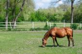 задевание лошади — Стоковое фото