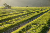 Morning sunrise on a water-melon field — Zdjęcie stockowe