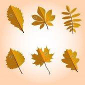 葉、葉、leafage、ニレ、オーク、ナナカマド、白樺、もみじ、栗、黄色、赤、オレンジ — ストックベクタ