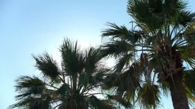 Twin coconut trees with blue sky. RAW video record. — Stock Video