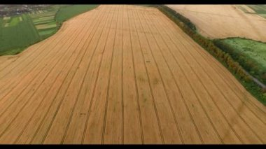 Aerial view of fields — Stock Video