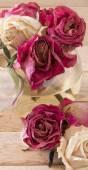 Rose appassite — Foto Stock
