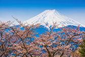 Mountain Fuji in spring ,Cherry blossom Sakura — Stock Photo