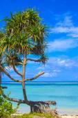 Beautiful sea and coastline — Stock Photo