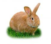 Rabbit isolated — Stock Photo