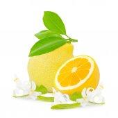 Lemon isolated — Stock Photo