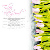 Tulip blooms — Stock Photo