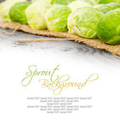 Sprouts — Stock Photo