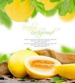 Melon fruit — Stock Photo