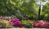 Old English park in bloom, south of London — Stock Photo