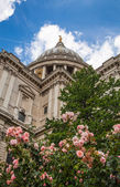 LONDON, UK - 18 AUGUST, 2014: St. Pauls cathedral, view from the garden — Stock Photo