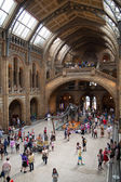London, National History Museum — Stock fotografie