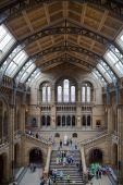 London, National History Museum — Stock Photo